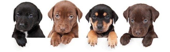 Puppy Training puppies
