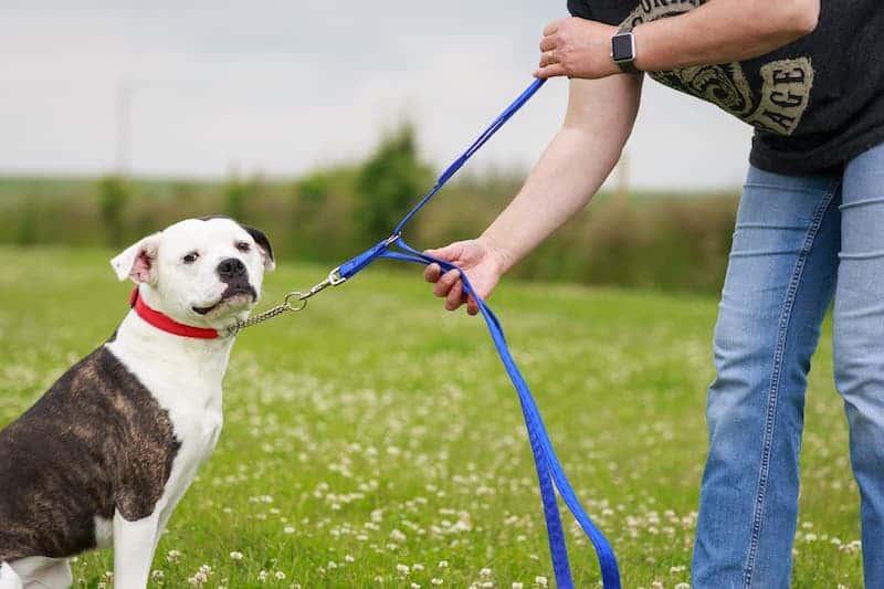 Double length leash
