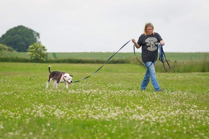 long dog training leash