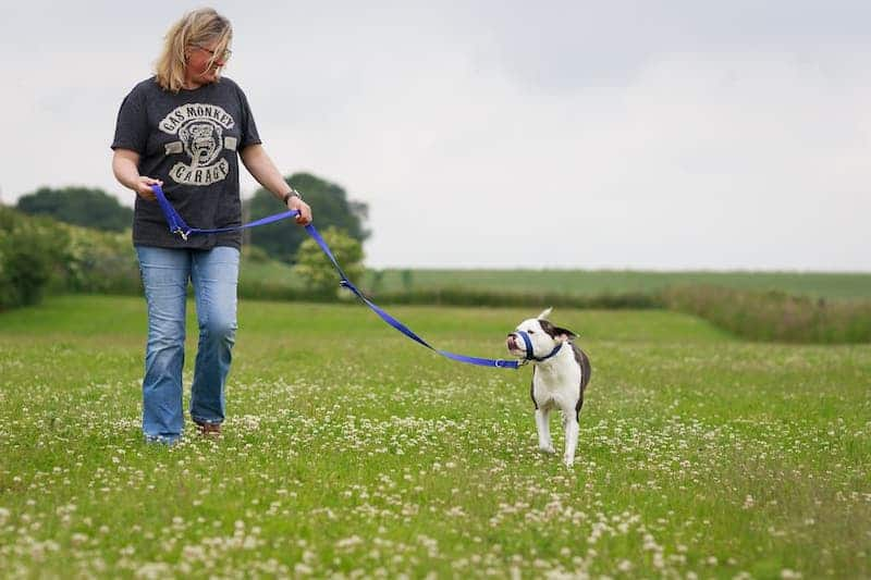 Using a multi length dog lead